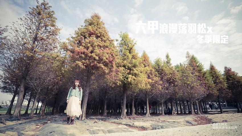【台南秘境】最近紅翻了的拍照景點,六甲林鳳營的落羽松