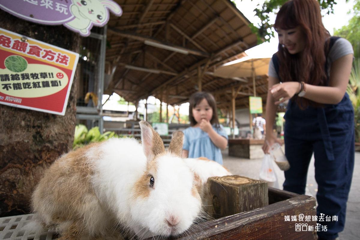 【高雄親子旅遊】草尼馬散步去!小人看飛機、看動物之旅!淨園農場!
